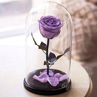 Сиреневая роза в колбе 26 см