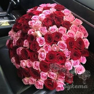 101-krasnaya-i-rozovaya-roza-60-sm